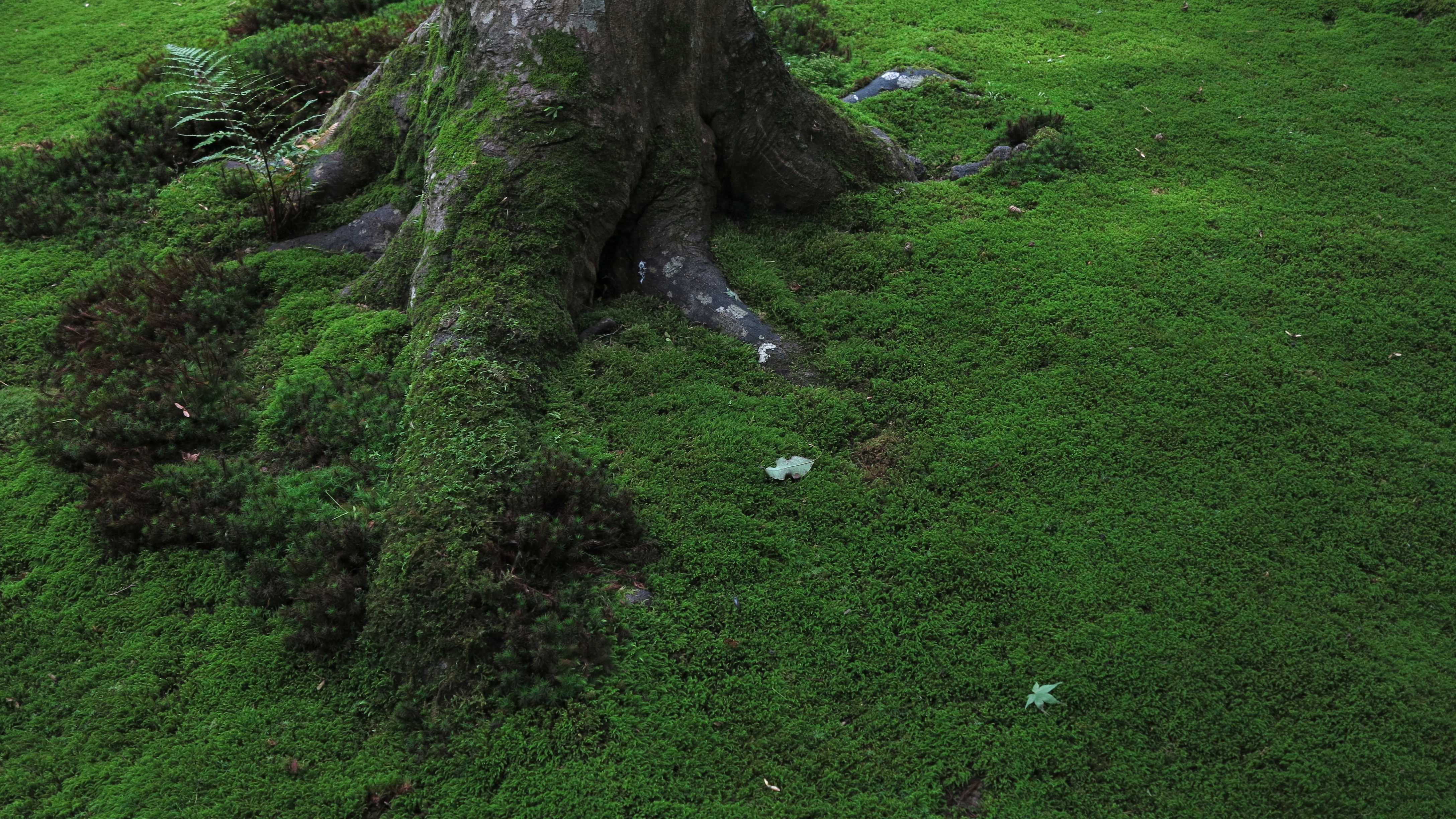resolution dark moss green - photo #25